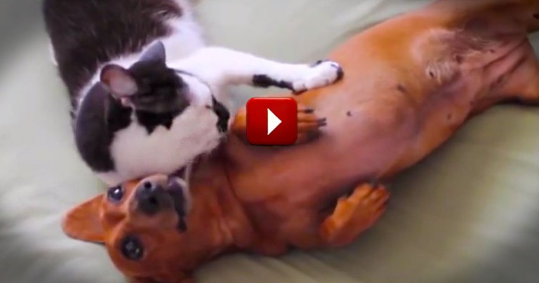 Apparently, This Kitty Thinks She's A Miracle Worker.  She's Definitely A Dog-Whisperer!  LOL