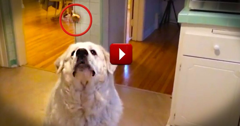 Wait 'Til You See What Happens Next!  See Why 7 Is This Pup's Lucky Number!