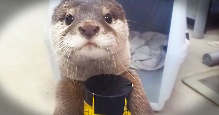 I Don't Know What's Cuter, This Sound This Otter Makes, Or the Proud Look On His Face.