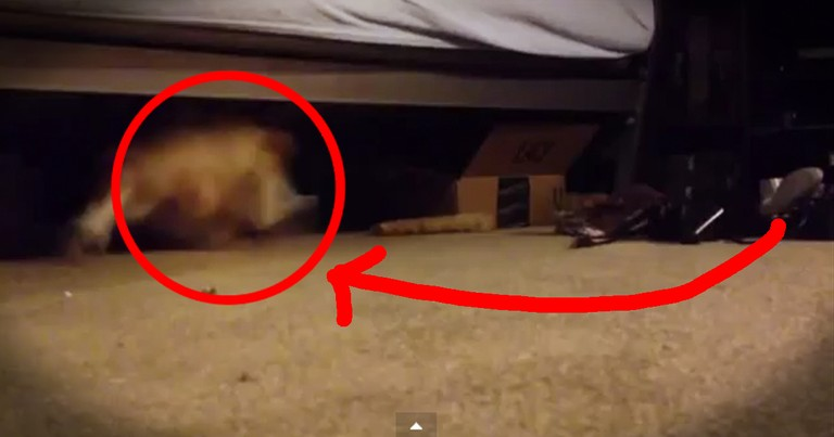 I Thought They Had A Monster Under Their Bed. Turns Out It Was Just This Cutie! LOL