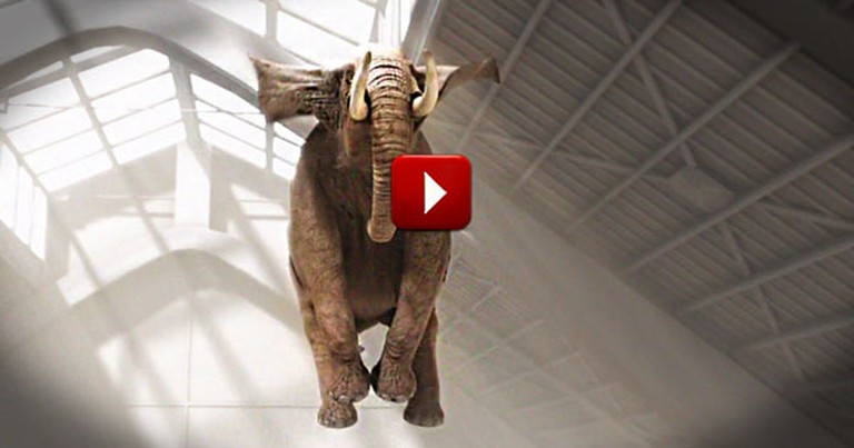 This High-Flying Elephant Will Put a Bounce In Your Step, Too. This Is Pure Joy on a Trampoline!