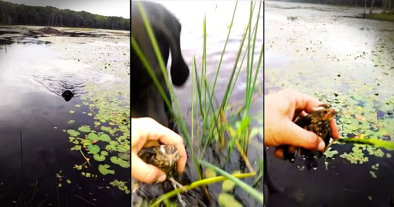 When This Heroic Pup Spotted Trouble, He Jumped Into Action. What Happened Next Is AMAZING!