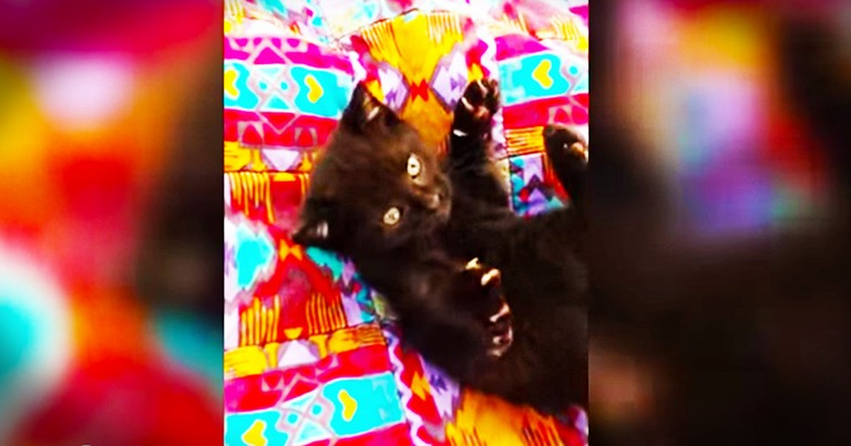 This Tiny Kitten Is FEROCIOUS. Okay Not Really, But I Still Can't Stop Watching Her!