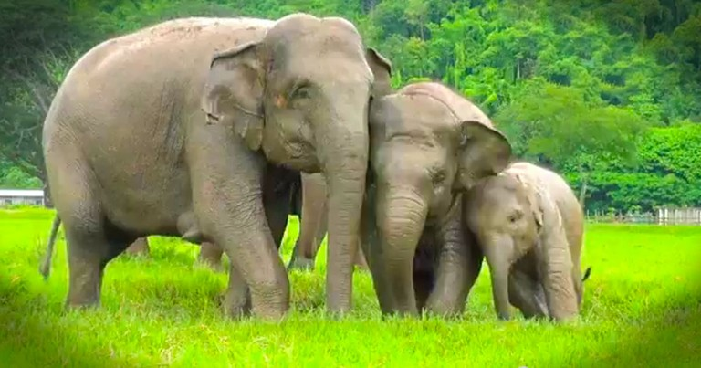 These Elephants Are SO Excited About Something Most Of Us Complain About. And It Just Made My Day!