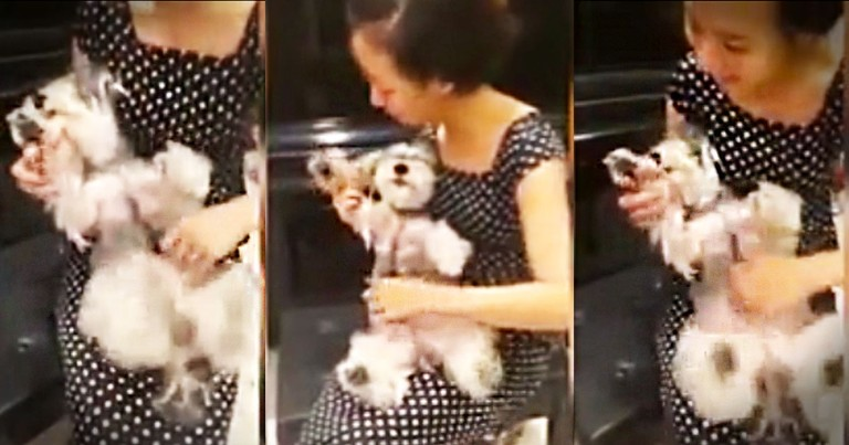 This Woman Just Discovered The World's Cutest Musical Instrument. This Happy Pup Just Made My Day!