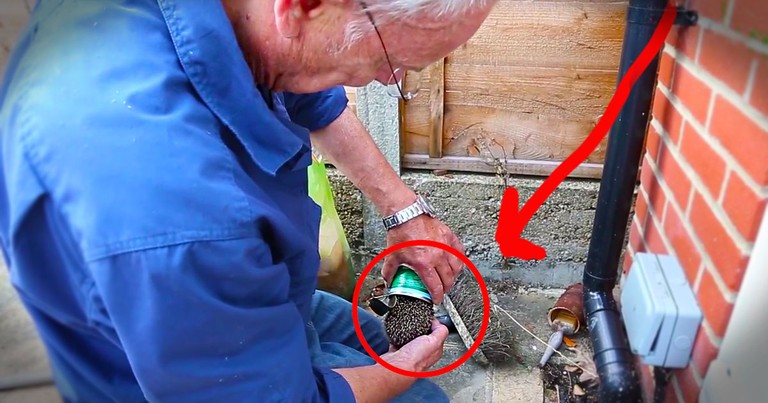 This Tiny Hedgehog Would Have Died In This Can. Until A Good Samaritan Appeared To Rescue Him!