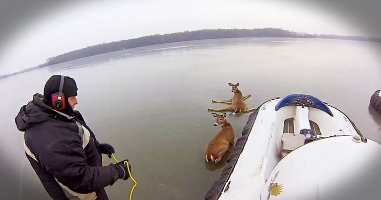 These Deer Were Exhausted And Trapped On The Ice. What This Father And Son Do Next Is Amazing!
