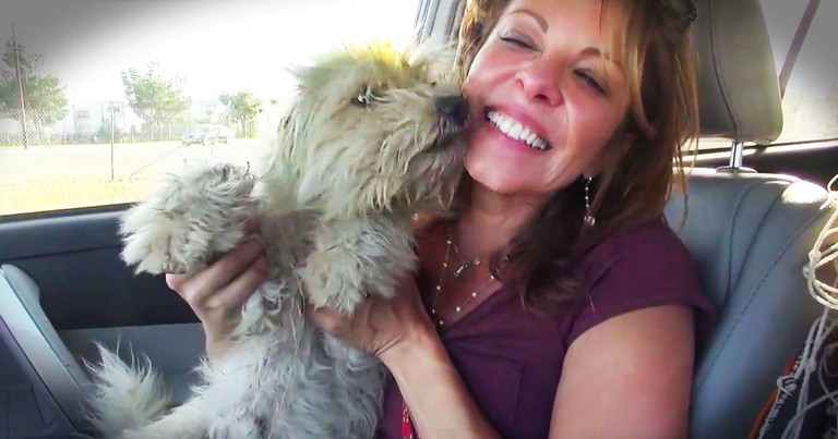 This Dog Was So Terrified He Buried His Head. After Kisses From Betty White, He Gets A Forever Home!