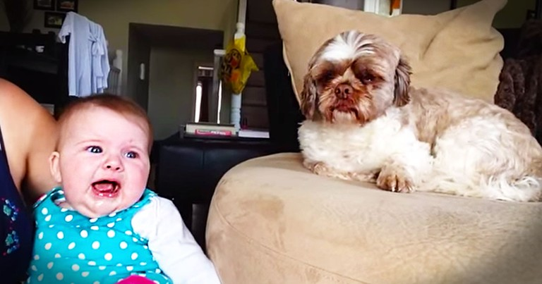 I've Heard Of The Dog Whisperer. But This Dog Is The BABY Whisperer, And It's Hilarious!