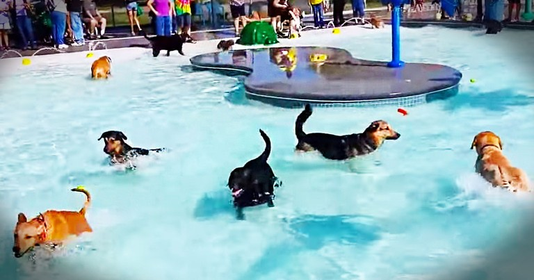 What This Park Did For These Special 4-Legged Guests Will Warm Your Heart. Cutest Pool Party Ever!