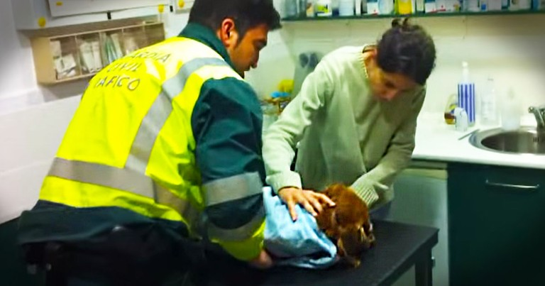 What Happened To This Dog Is Heartbreaking. But How A Kind Man Treated The Poor Pup Amazed Me.