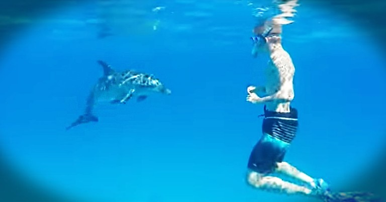 I Don't Know What's Better, The Friendly Dolphin Or The Giggling Snorkeler With A Camera. Too Sweet!