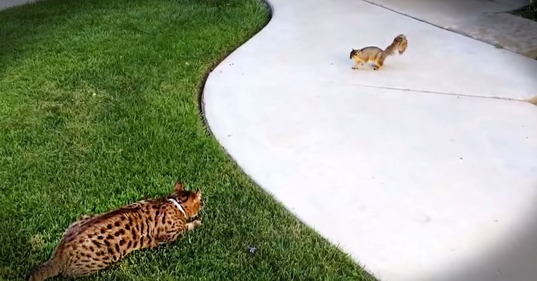 I Thought This Poor Squirrel Was Gonna Be Lunch. But Apparently, This Kitty Is A Serious Scaredy-Cat