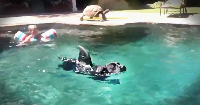 There's Something Lurking In The Water. And It's Terrifyingly ADORABLE!