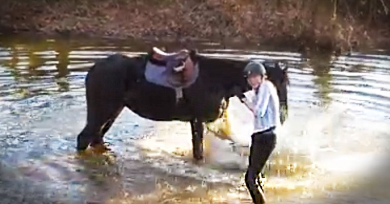 Scared Horse Finds JOY By Splashing His Human