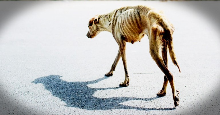 Starving Dog Is Rescued And Has A Touching Transformation