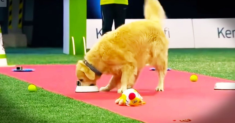 Pup Can't Seem To Focus And Has LOTS Of Fun