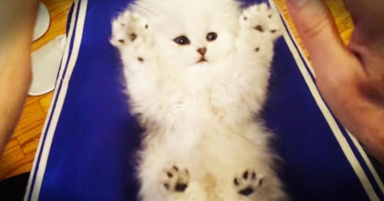 Cute Kitten REALLY Loves Her Tickles