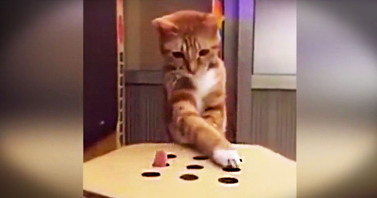 Kitty Plays Whack-A-Mole With Her Human