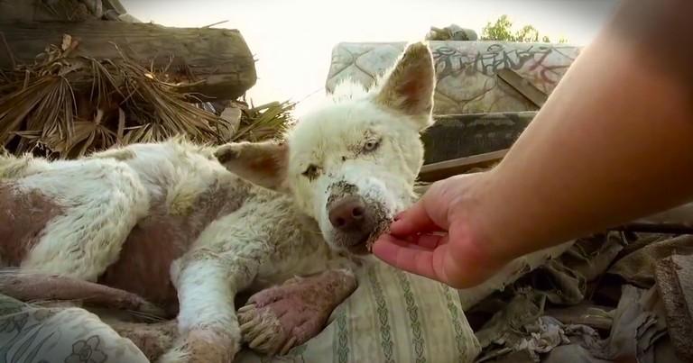 2 Dogs Were Treated Like Trash 'Til Someone Showed Them Kindness