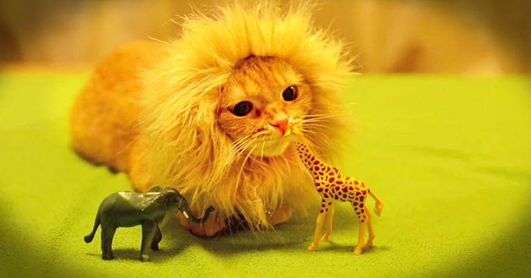 Lion Kitty Adorably 'Attacks' A Giraffe