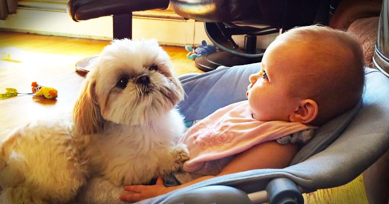Cute Baby And Her Sweet Dog Will Melt Your Heart