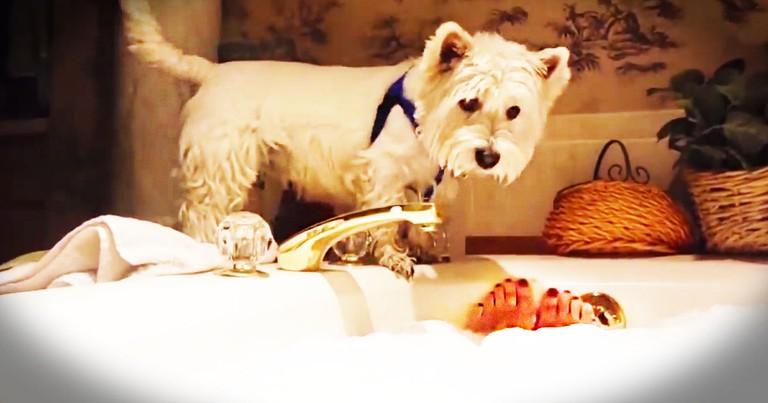 Westie Can't Resist A Bubble Bath