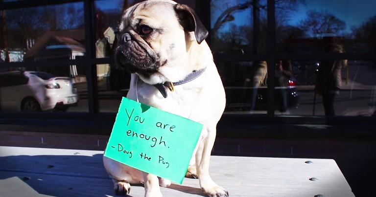 Cheerful Pup Brightens Day For People Feeling Low