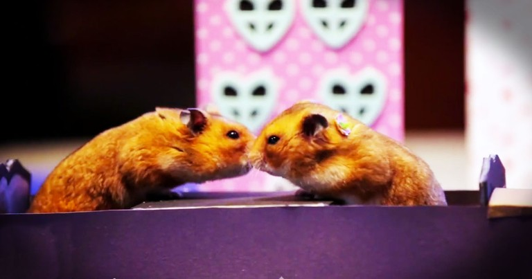 Tiny Hamsters Enjoy A Tiny Date--LOL