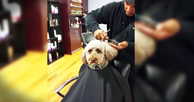 Barber And Pup Are The Cutest Pair!