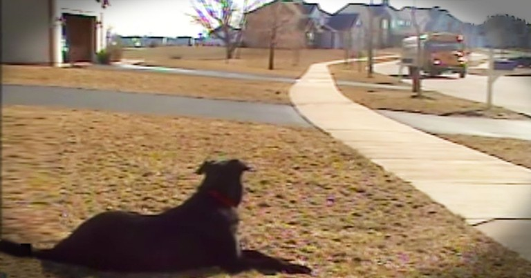 Patient Pup Adorably Waits For School Bus