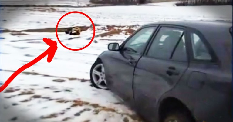 What This Hero Found Frozen To The Pavement SHOCKED Him!