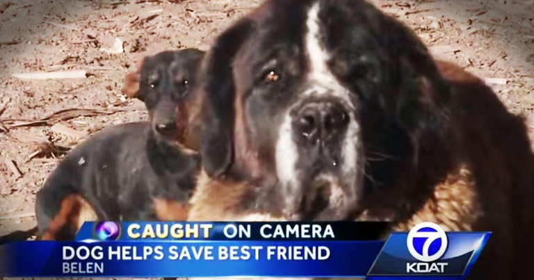 When A Big Dog Was In Danger, His Tiny BFF SAVED Him!