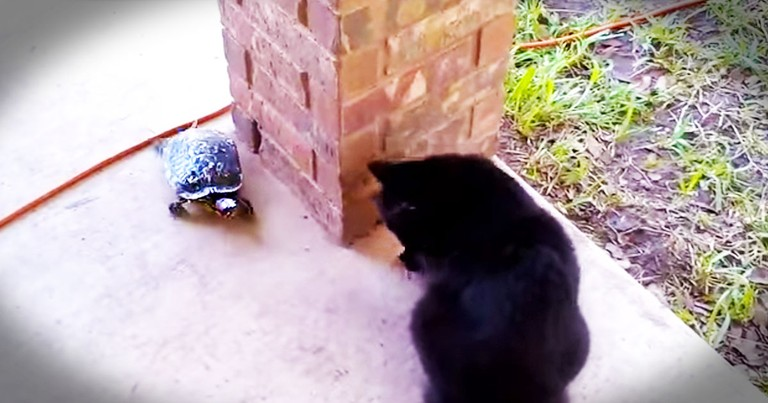 Unlikely Friends Play Cutest Game EVER--Aww!