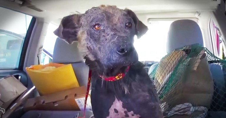When These Abandoned Dogs Got A 2nd Chance. . .TEARS!