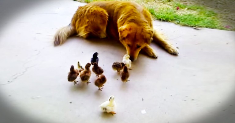 Apparently, Easter Came Early For This Pup And His 10 'Kids'