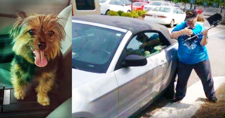 Veteran Rescued A Dog Trapped In A Hot Car. . .And Landed In Jail!