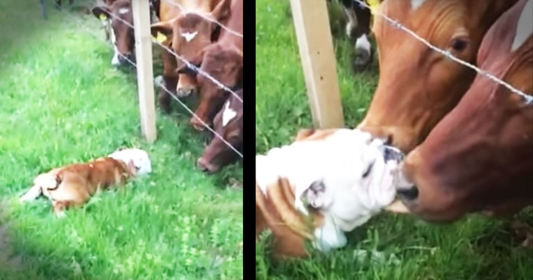 This Pup Has Some Big BFFs. And Apparently, They're REALLY Happy To See Him!