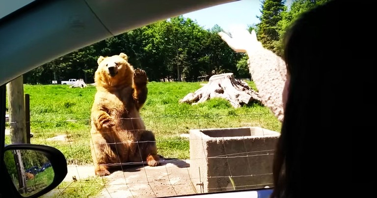 Waving Bear Surprises Folks With THIS Nifty Trick!