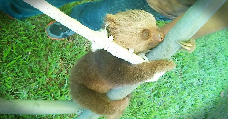 Who Else Wishes They Could Join This Rescued Baby On His Jungle Gym?