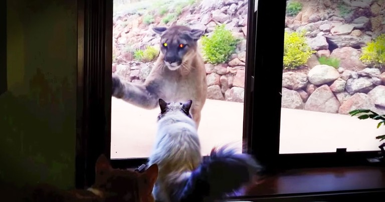 Apparently, This Brave House Cat Thought He Was Looking In A Mirror--LOL!