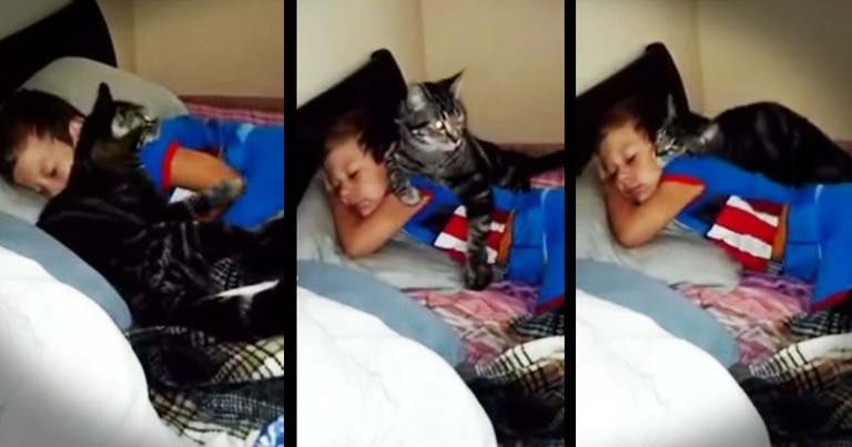 This Kitty's Best Friend Finally Came Home And You Have To See His Reaction