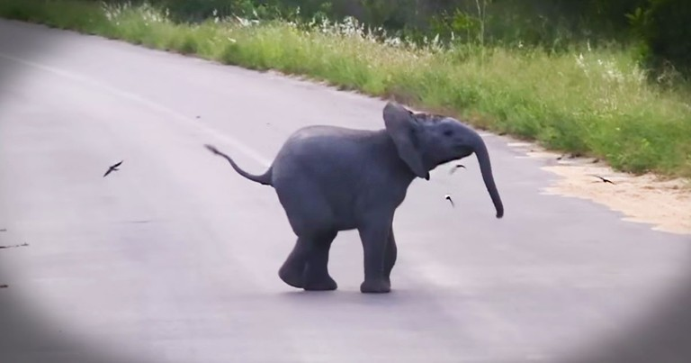 This Baby Elephant's Play Date With These Birds Will Make You Smile Guaranteed