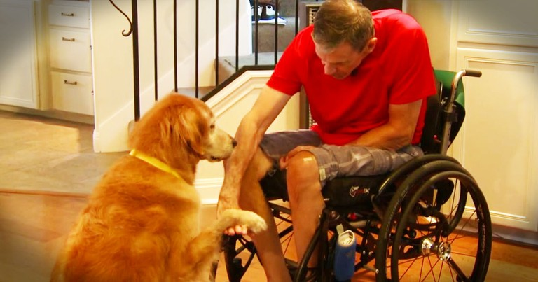 He Was Paralyzed With No One To Help. Until His Dog Proved He's A Furry Angel!