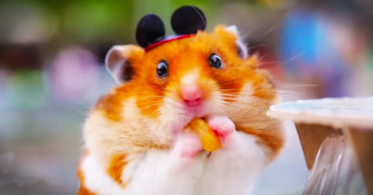 This Tiny Hamster Riding Tiny Disney Rides Just Made My Week!