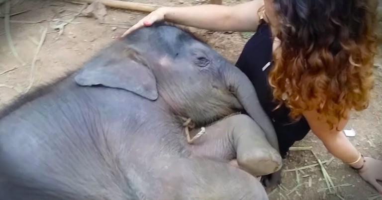 Sleepy Elephant Made My Heart All Kinds Of Happy