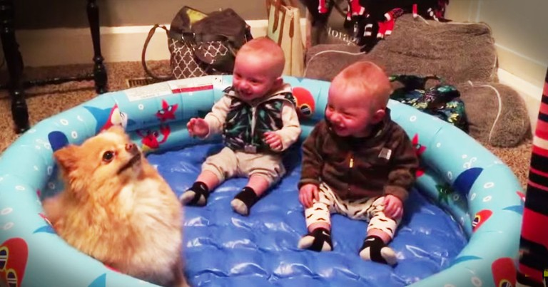These Giggly Babies And Their Pup Just Made My Day!