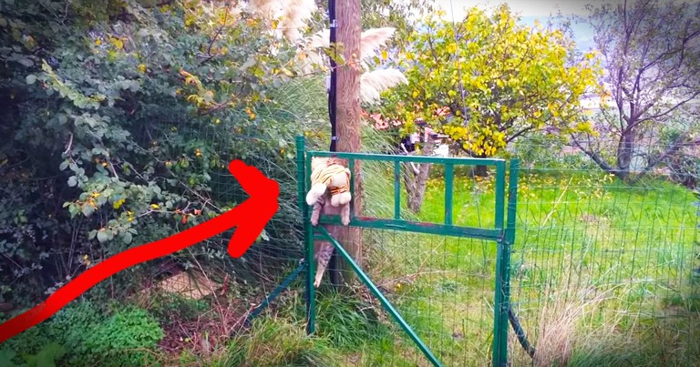 Kitty Adorably 'Borrows' Stuffed Tiger From The Neighbors
