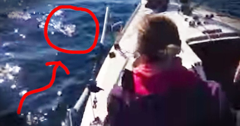 Shocked Sailors Rescue A PUPPY From Chilly Sea Waters