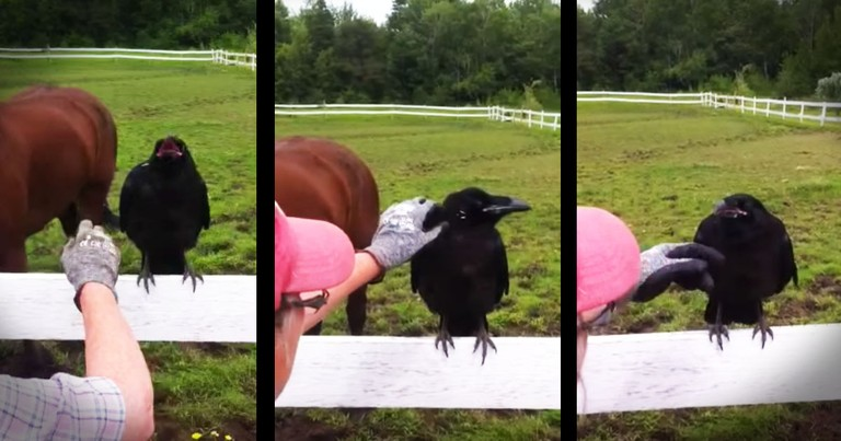 Wild Raven's Rescue Is Truly Incredible!